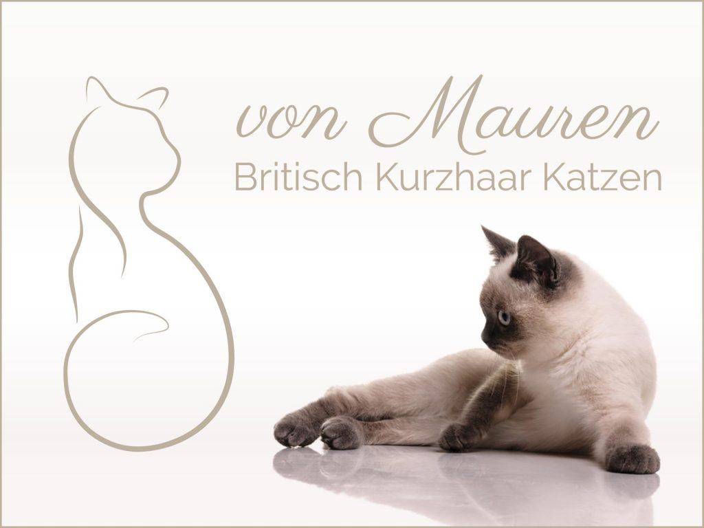 Corporate Design von Mauren Britisch Kurzhaar Katzen